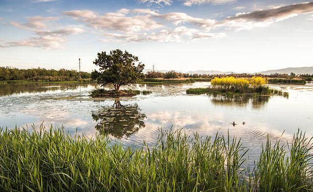 L'estany del Cortalet. Aiguamolls de l'Empordà.