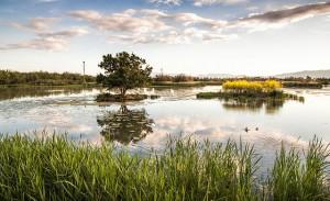 Foto guanyadora de Wiki Loves Earth 2014. L'estany del Cortalet. Aiguamolls de l'Empordà.